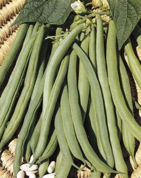 Graines semis haricot a rames blanc de juillet bte 200 g - Que semer en juillet ...