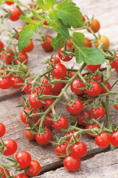 graines semis tomate cerise sweet 100 hf1 pqt 5 g. Black Bedroom Furniture Sets. Home Design Ideas