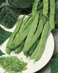 Graines semis haricot nain artemis mangetout plat pqt 1 kg - Haricot mange tout ...